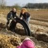 Pose des tuyaux d'irrigation - Crédit photo : Pomme d'Amap