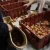 Distribution salle Voltaire - Crédit photo : Pomme d'Amap
